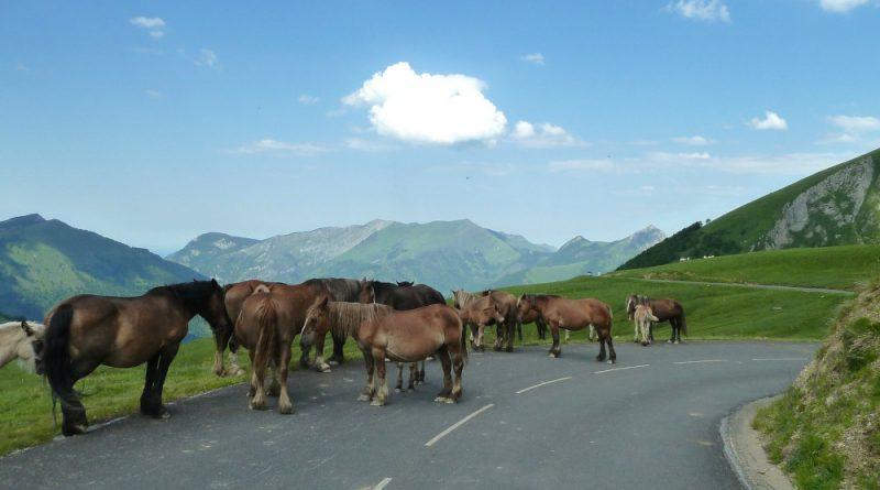cavalli in strada di montagna